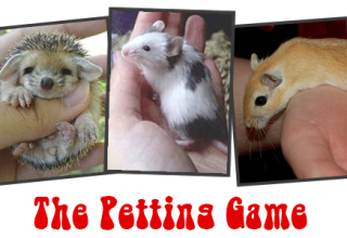 The Petting Game
