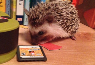 Hedgie FAQ