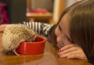 Hedgies!!