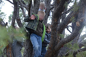 boys_in_trees